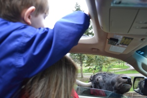 The Who didn't want to get too close, but he was willing to toss some bread through the sunroof.